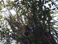 10-06 Possum in the Ruahines (Coppermine Creek)